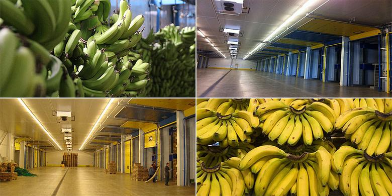 Banana Ripening Rooms