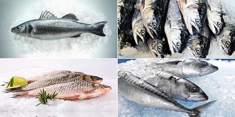 Fish Blast Freezing Cold Storage